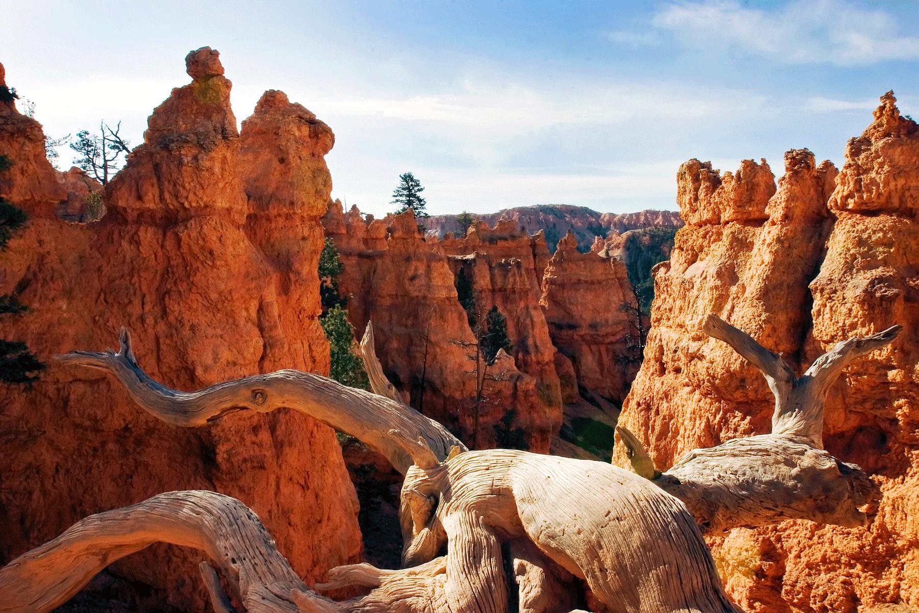 bryce-canyon-national-park-utah-trail-scene